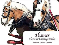 Homes Horse and Carriage Rides in Watford offers you the excellent opportunity to have some days of vintage tour on @519 849 5114