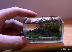Inspirational Aquascapes