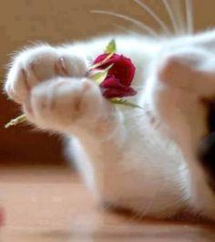 mel-cat:  ❤️ Happy Valentines! ❤️