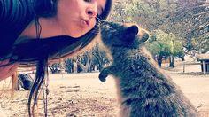 Ein Quokka Kuss am morgen vertreibt kummer und sorgen   #feltinlove #quokka #kiss #rottnestisland #downunder #australia #animallovers #natur #solotravel #wanderlust #wanderingaround #kuss #roadtrip #anotherdayinparadise #happiness #happiestanimalintheworld #travel #perth #western_australia #westcost #viaggiare #backpackinglife #reisende #wennträumefliegenlernen #love #unforgettablemoment #petit #naturallove #island #beach7 by _wenn.traeume.fliegen.lernen_ http://ift.tt/1L5GqLp