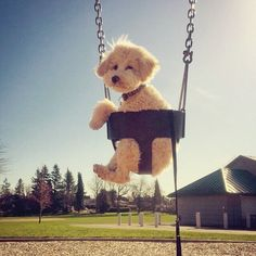 What do we do? We swing swing swing swing..... Can I come down now????? PLEASE????