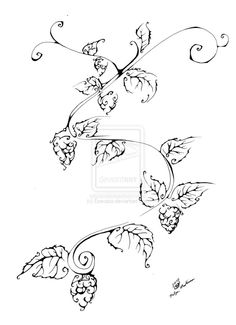 drawings of hops - Google Search