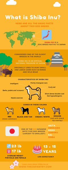 Shiba Inu is a dog breed that is native to Japan. Here is an infographic that summarizes all the basic facts and characteristics about Shiba Inu! You will find the most interesting facts about dogs on my account. Japanese Dog Breeds, Japanese Dogs, Puppy Care, Dog Care, Shiba Inu, Animals And Pets, Cute Animals, Barnyard Animals, Black Lab Puppies