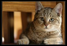 pretty cats | Cats photo, cat, pretty cat, cat photo