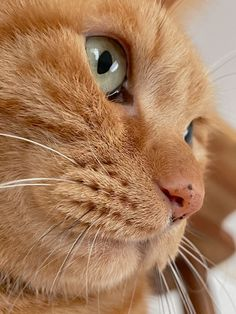 Orange Tabby Cats, Cat Drinking, Cute Cat Breeds, Ginger Cats, Fantastic Beasts, Beautiful Cats, Animal Pictures, Cats And Kittens, Funny Cats