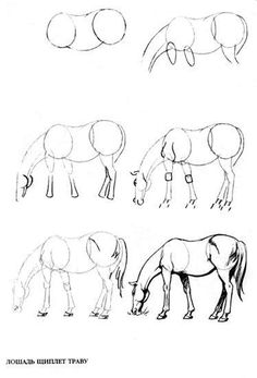 Draw Horses How to draw a horse pencil. Horse Drawings, Animal Drawings, Pencil Drawings, Pencil Art, Animal Sketches, Drawing Sketches, Drawing Ideas, Sketching, Horse Drawing Tutorial
