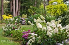 Houses & Gardens Article: Hydrangea heaven in Marlborough - NZ House & Garden