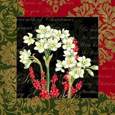 Christmas Botanical Narcissus <br> For Licensing Only <br> Pamela Gladding