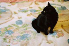 by Sarita Lolita, via Flickr