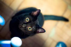 14 Black Cats Who Are All of Us