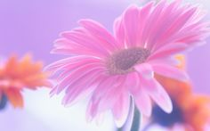 Floral Wedding Background For Your Virtual Album By