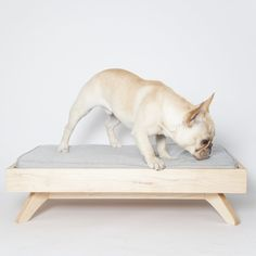 Felix Chien - Joey Low Back Dog Bed, $744.00 (http://www.felixchien.com/joey-low-back-dog-bed/)