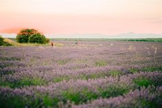 Lavender Field Couples Shoot in Spain by Natalia Ortiz Wedding Planner Spain Wedding Abroad, Lavender Fields, Couple Shoot, Love Story, Wedding Planner, Madrid, Spain, Country Roads, Couples
