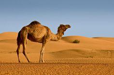 dunes of dubai!
