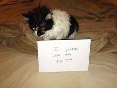 cat-shaming-42__605.jpg (800×600)