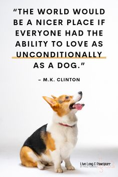 Dog Quote for Pet Owners - The World would be a nicer place if everyone had the ability to love as unconditionally as a dog.  Visit our pet blog for dog tips, cat advice and info on different breeds, training and behaviors.   #petmom #dogmom #catlady #dogowner #catowner #petparent #petblog #petblogger #lifehacks #petadvice #pets #doglover