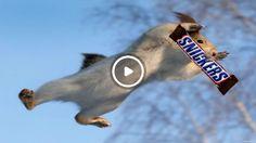 Белка ворует Шоколад В магазине