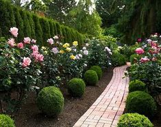 """""""I do adore boxwoods, as you can see,"""" says Connie of the balls and cones that give year-round structure to her rose garden."""