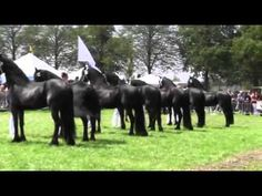 Friesian Horse ~ This is an AMAZING video.