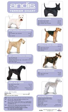 Grooming Guide - Page 2 - All Groom