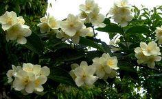 This is the true IASOMIE Whisper, Light Colors, Amazing, Flowers, Plants, Pictures, Hush Hush, Bright Colours, Photos