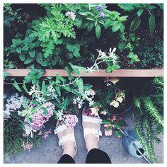 .  ゼラニウムの花も咲き始めました。  良い週末を♡ . . #herb #garden