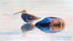 Eurasian Curlew. - Lars Jonsson - watercolor