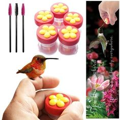 hand feed hummingbirds, hummingbird hand feeder, hummingbird feeder, this kit has the hummingbirds feeding out of your hand!  Be one with nature.