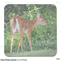 Fawn Party Coaster Square Paper Coaster