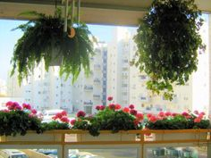 21 Green Ideas for Beautiful Balcony Decorating with Flowers