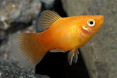 Aquarium Ideas, Aquarium Fish, Fish Room, Hermit Crabs, Fish Care, Aquatic Plants, Freshwater Aquarium, Tropical Fish, Betta