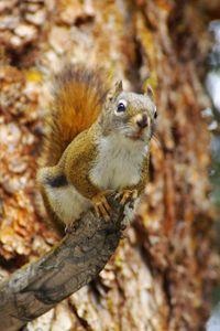 Squirrel Hunting 101 http://www.twinhunts.com/2012/08/26/squirrel-hunting-101/