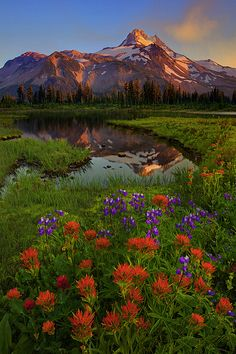 SCurvePaintbrushReflection_720 by Kevin McNeal {Jefferson Park Wilderness, Oregon}