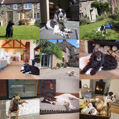 100 best dotty4paws dog friendly accommodation images in 2019 dog rh pinterest co uk