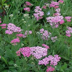 Pinterest the world s catalog of ideas for Easy maintenance perennials