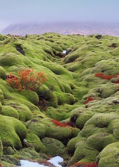 Elf Garden, Vik City, Iceland (Best Travel Europe)