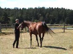 Parelli Natural Horsemanship Level 1, part 1 #horse #videos #equine http://globalhorsecents.com