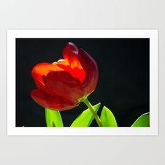Tulips love Art Print by msalazar Love Art, Tulips, Art Prints, Nature, Painting, Art Impressions, Naturaleza, Painting Art, Paintings