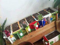 Todos queremos o quisimos tener una pequeña huerta en algún momento de nuestra. Container Plants, Container Gardening, Vegetable Gardening, Milk Carton Crafts, Milk Cartons, Regrow Vegetables, Veggies, Recycling, Strawberry Planters