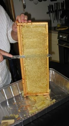 How to Extract Delicious Fresh Honey from Bee Hive Honey Frames Uncapping the frame Beekeeping For Beginners, Gardening For Beginners, Harvesting Honey, Hives And Honey, Honey Bees, Raising Bees, Bee Farm, Backyard Beekeeping, Busy Bee