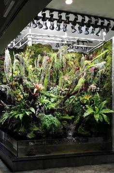 Tropical Terrariums, Terrariums Diy, Gecko Terrarium, Terrarium Reptile, Planted Aquarium, Biotope Aquarium, Aquarium Landscape, Les Reptiles, Vegetable Gardening