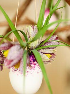 Märchenhafter Blumenschmuck im Ei! #twbm #easter #ostern #Krokus #flower #blumen