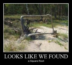 This picturerepresents two things 1 which may be a square root of mathematics 2 a root of a tree is malformed and trunk or root forms a caudrado