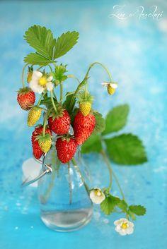 Poziomki strawberries