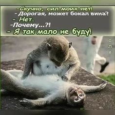 Post with 0 votes and 2531 views. Very Funny Memes, Funny Jokes, Animals And Pets, Cute Animals, Sad And Lonely, Letter Art, My King, Funny Moments, Trending Memes