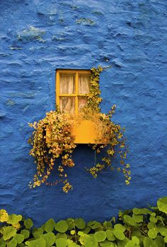 yellow window with window box in a ultramarine painted wall photograph - fine art photo print inches Mellow Yellow, Blue Yellow, Bright Yellow, Cobalt Blue, Art Texture, Window View, Blue Dream, Window Boxes, Blue Walls