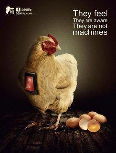 go #vegan #vegetarian