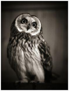 nuu nuuuuuuuuuuu owl