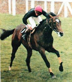 Horse Racing, Race Horses, Royal Palace, Show Horses, Animals, Athletic, Animales, Animaux, Athlete