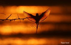 Dancing Angel by Tejas Soni on 500px